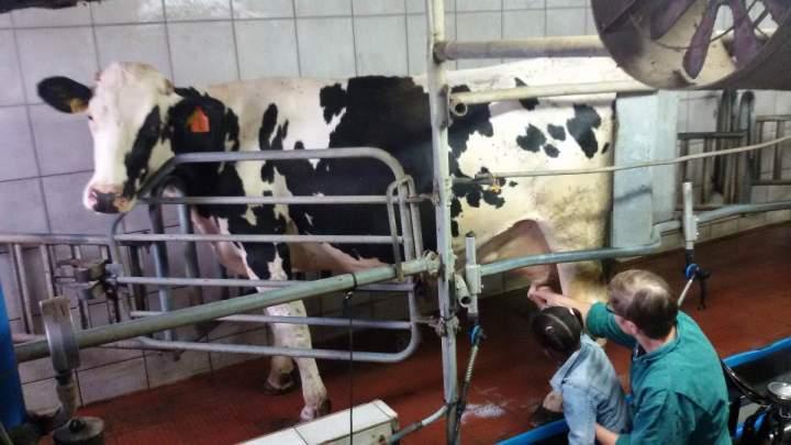 Besuch beim Milchhof Heesen
