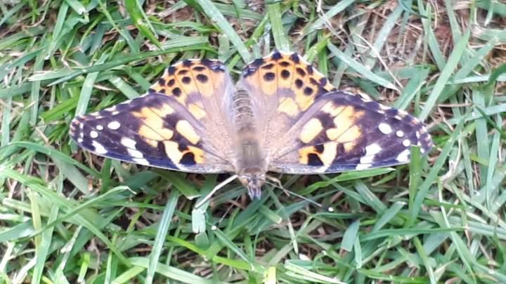 Von-der-Raupe-zum-Schmetterling