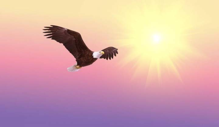 Impuls am Abend - Adler oder Geier